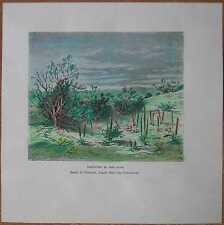 1881 Reclus print VEGETATION IN KYZYL KUM DESERT, CENTRAL ASIA (#35)