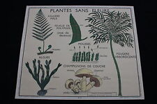 R209 Affiche scolaire papier Rossignol 11 PLANTES 12 CLASSIFICATION VEGETAUX