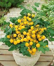 Tomato Vegetable seeds Balkonnoe Miracle Golden from Ukraine early