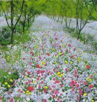 mix 200 seeds Garden yard Patio Plant Bonsai Shade-tolerance wild flowers