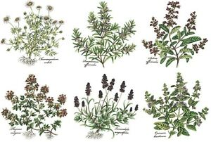 Herb Thyme Basil Rosemary Lavender Select-A-Size Waterslide Ceramic Decals Bx