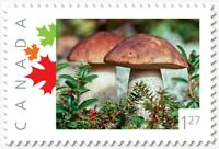 MUSHROOMS = 1.27 rate = Picture Postage MNH Canada 2019 [p19-05s03]