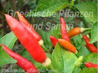 🔥 🌶️ Tabasco C.frutescens Chili  das Original 10 frische Samen Balkon Kübel