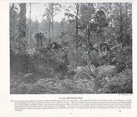 1897 Vittoriano Stampa ~ Australiano Bush ~ Forti ( Testo