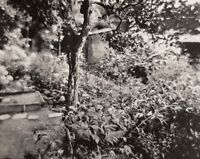 1955 Original Josef Sudek Silver Gelatin Photo Botanical Garden Landscape Czech