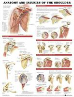 The Muscular System Anatomy Of The Shoulder The Skeletal System Ligaments Joints