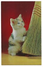 Tri Colored KITTEN FUN with BROOM Calico  Postcard Cute Cat White Blue Eyes