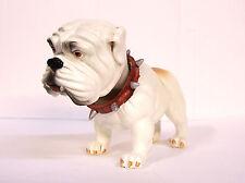 "White English Bulldog Bobble Head Knocker Hound 6"" Polystone Resin"