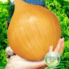 Bulb Onion seeds Bogatyirskaya sila / Heroic Might Giant XXL Ukraine 0,5 g S0893