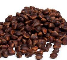 Natural Seeds Siberian cedar pine nut kernel Harvest 2016 1 pound
