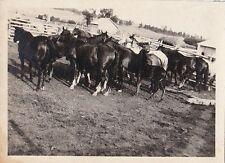 Antique Photograph Large Group of Horses Standing In Corale Field Pen Equestrian