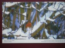 POSTCARD D5-6 ANIMALS A ROBIN IN WINTER