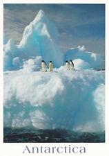 Ansichtskarte Antarktis: Adelie Pinguine auf einem Eisberg - Adelie penguins