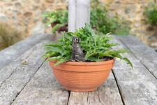 More details for feeder friends labrador figure plant drip feeder - handmade ornament figurine