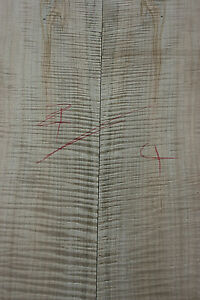 AAA+ Fiddleback Ambrosia Spalted Maple bookmatched carved guitar top 24mm S4