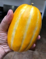 Heritage Cucumis Melo Makuwa 20 Seeds. Easy to grow hand melon seeds, delicious!