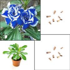 5Pcs Blue White Side Desert Rose Flower Plant Seeds Amazing Plant Bonsai Top