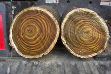 Staghorn sumac turning wood