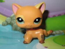 "Petshop Chat Europeen* Pet shop Kitty Cat #1643 ""Port gratuit/Free shipping""NEUF"