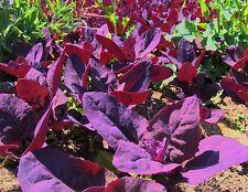 Orach-Purple Spinach 1000 seeds ( 8gr )