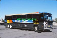 Blue Bird Bus Lines 355 original Kodachrome bus slide