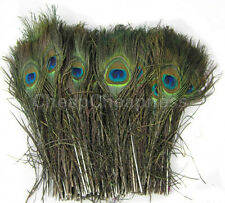 50pcs Natural Real Peacock Tail Eye Feathers for Decoration13 Inches GT