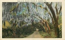 St. Augustine Florida~Spanish Moss Drive in Dr. Garrett's Grounds~1920s Postcard