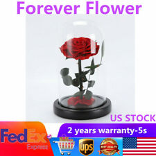 Valentine's Day Forever Rose Flower Preserved Immortal Fresh Red Rose in Glass