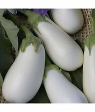 Eggplant seeds Iceberg  Heirloom Vegetable Seed from Ukraine
