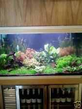 Live Aquarium Plants for 70-100L Tank -  Beautiful Set Aquatic Tropical