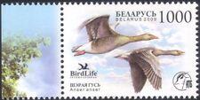 Bielorussia 2009 Grey Goose/Birds/NATURA/conservazione della Fauna/1v (n30904)