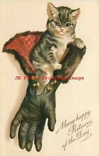Many Happy Returns of the Day, Kitten in a Leather Glove, Cat