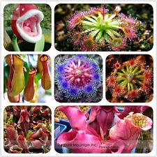 100pcs Insect-Catching Plant Enchantress Carnivorous Bonsai Seeds
