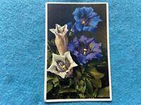 Gentiana acaulis Flowers Vintage Postcard