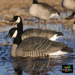 AVERY GREENHEAD GEAR PRO GRADE CANADA LIFE-SIZE LS GOOSE FLOATER RESTER DECOYS