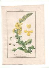 1832-34 Antique H/C print Verbascum Phlomoides, Winkler Medical Botany