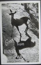 Hello Deer Greetings From Rainier National Park 1951 Real Photo Postcard