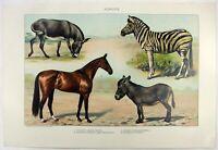 Horses: Original 1902 Dated Stone Chromo-Lithograph by Julius Bien & Co. Antique