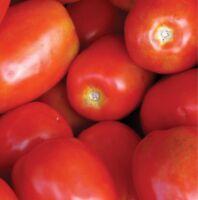 Tomato Roma Italian  Non GMO Heirloom Garden Vegetable Seeds Sow No GMO® USA