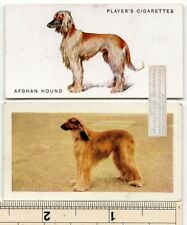 Afghan Hound Dogs 2 Different Vintage Ad Trade Cards 2nd