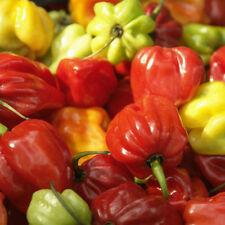 100pcs/set Red Pepper Carolina Reaper Trinidad Moruga Scorpion Chili Seeds Spicy