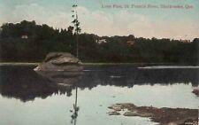 Antique POSTCARD c1909 Lone Pine St. Francis River SHERBROOKE, QUEBEC 12925