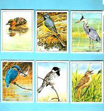 CIGARETTE/TRADE/CARDS. Ensign. WATER LOVING BIRDS. (L). (2002). (Full Set 6).