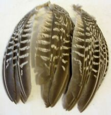 """3 ~ PHEASANT WINGS With FEATHERS ~ They are about 7"""" long"""