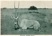Carte ETHIOPIE ABYSSINIE Antilope Oryx