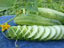 Straight Eight Cucumber Seeds, NON-GMO, Heirloom, Variety Sizes, FREE SHIPPING