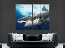 GREAT WHITE SHARK POSTER SEA OCEAN PREDATOR ART WALL PICTURE GIANT HUGE