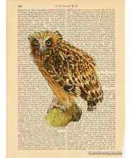Buffy Fish Owl Art Print on Antique Book Page Vintage Illust Nocturnal Birds