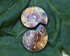 Ammonite Fossil Pair - Third Eye Chakra - Meditation