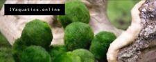 !!DEAL!! 4 Marimo moss balls!